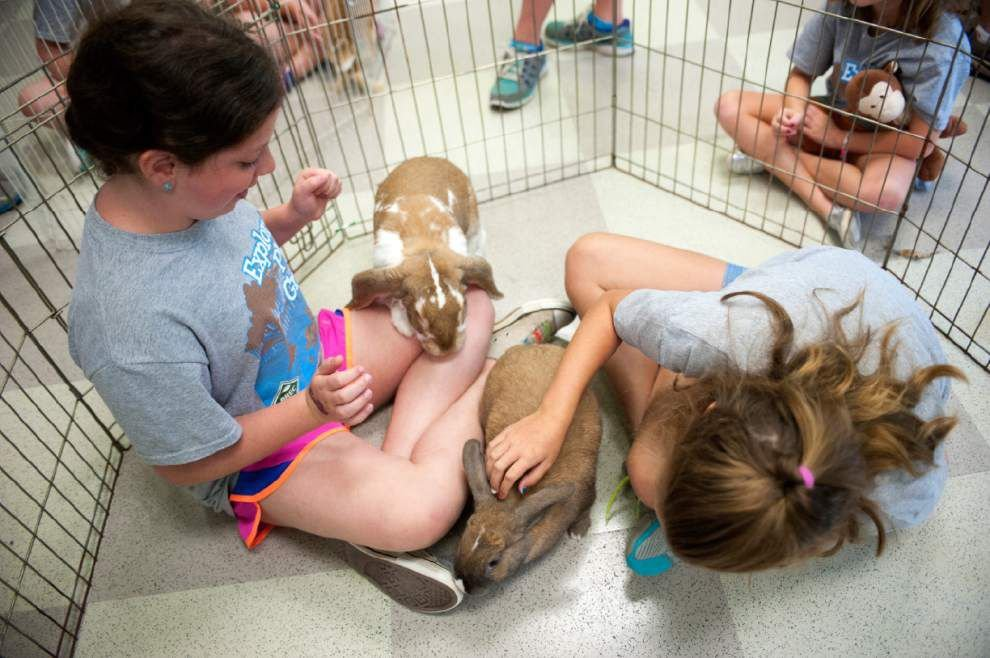 Campers are all ears, learn to 'speak rabbit' at bunny rescue visit _lowres