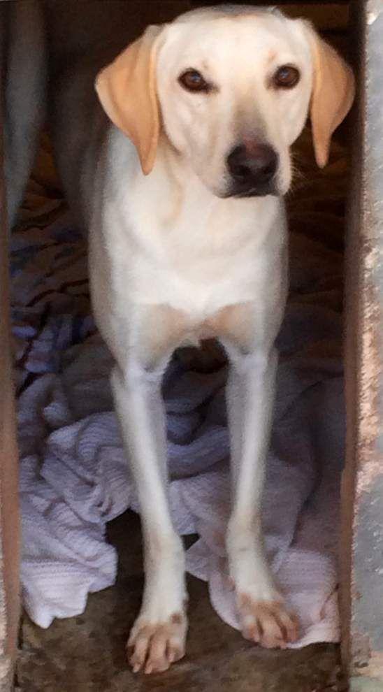 Livingston-Tangipahoa pets available for Nov. 20, 2014 _lowres