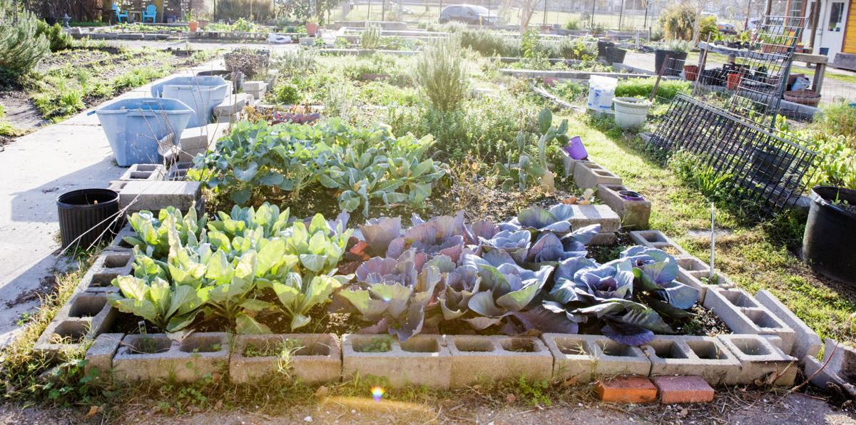 NO.gardens.epl.011417_07.JPG