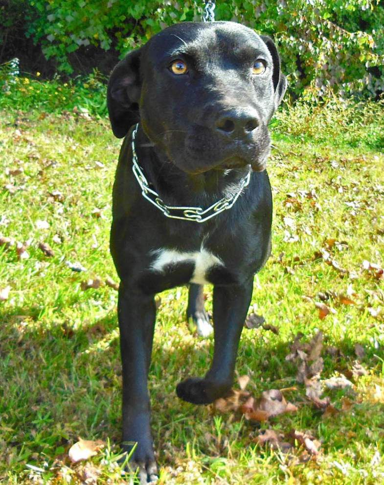 West Feliciana pets available Nov. 20, 2014 _lowres