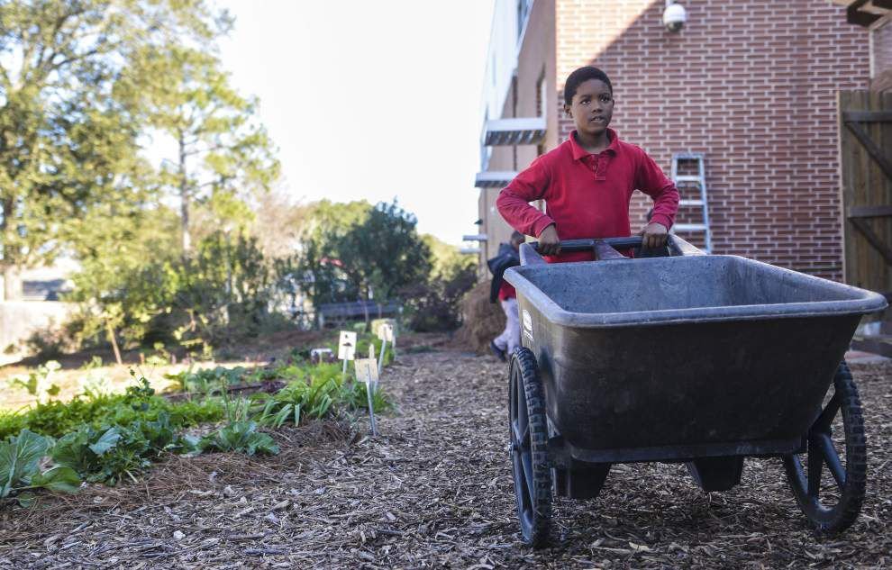 Gardens teach students science, healthy habits _lowres