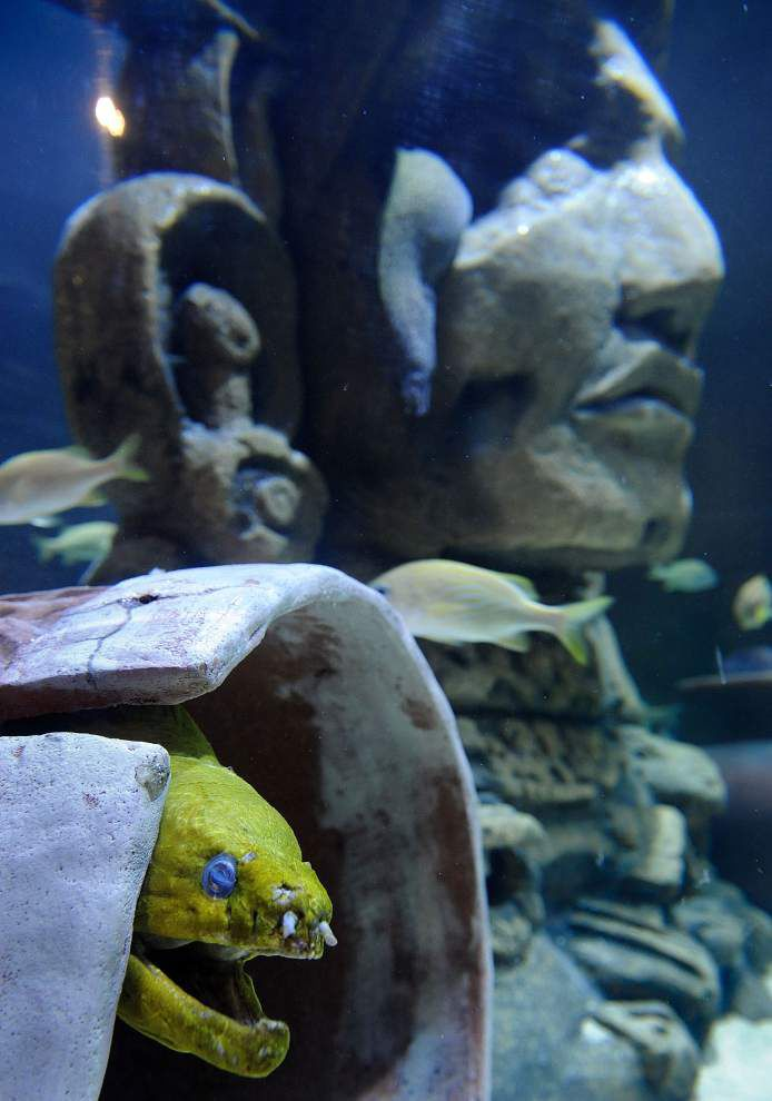 Aquarium lets visitors swim with creatures of the Caribbean _lowres