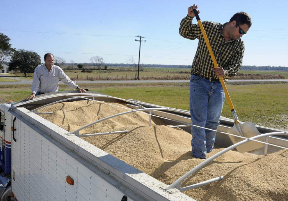 Louisiana rice farmers could benefit from normalized Cuba relations _lowres