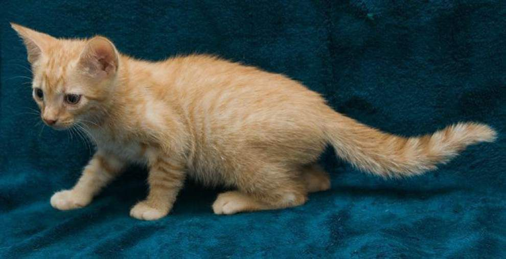 Southside cats available for Nov. 6, 2014 _lowres