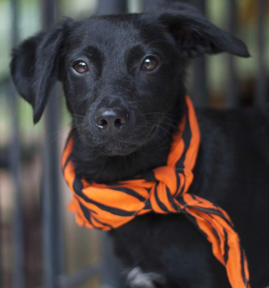 Mid City pets for April 16, 2015 _lowres