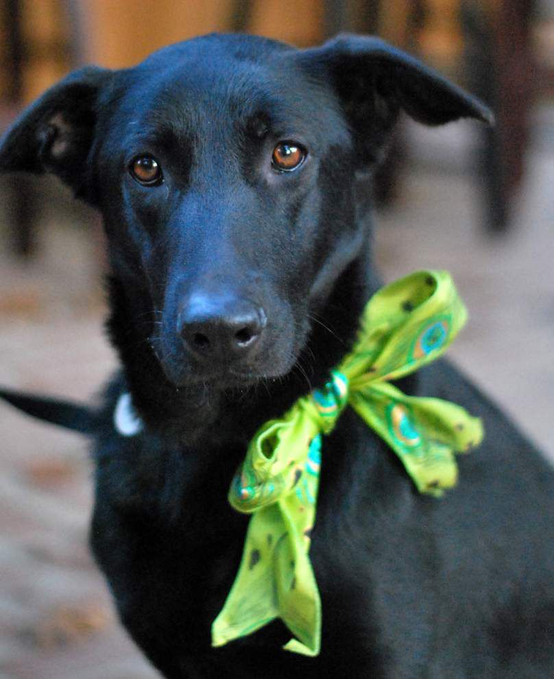 Southside pets available for Jan. 1, 2015 _lowres