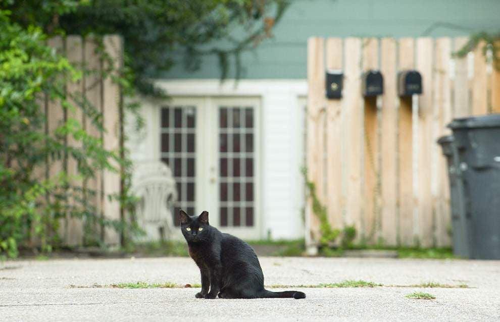 EBR eyes program to spay, neuter 'community cats' _lowres