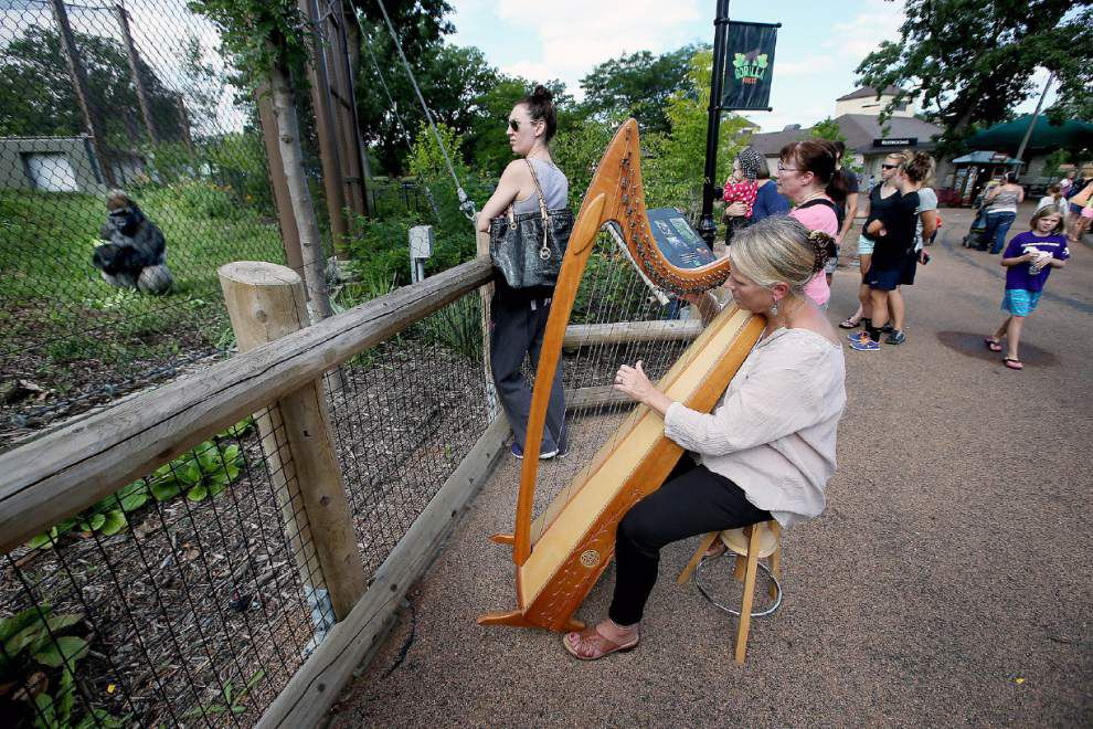 Harpist's mellow tone soothes apes at St. Paul zoo _lowres