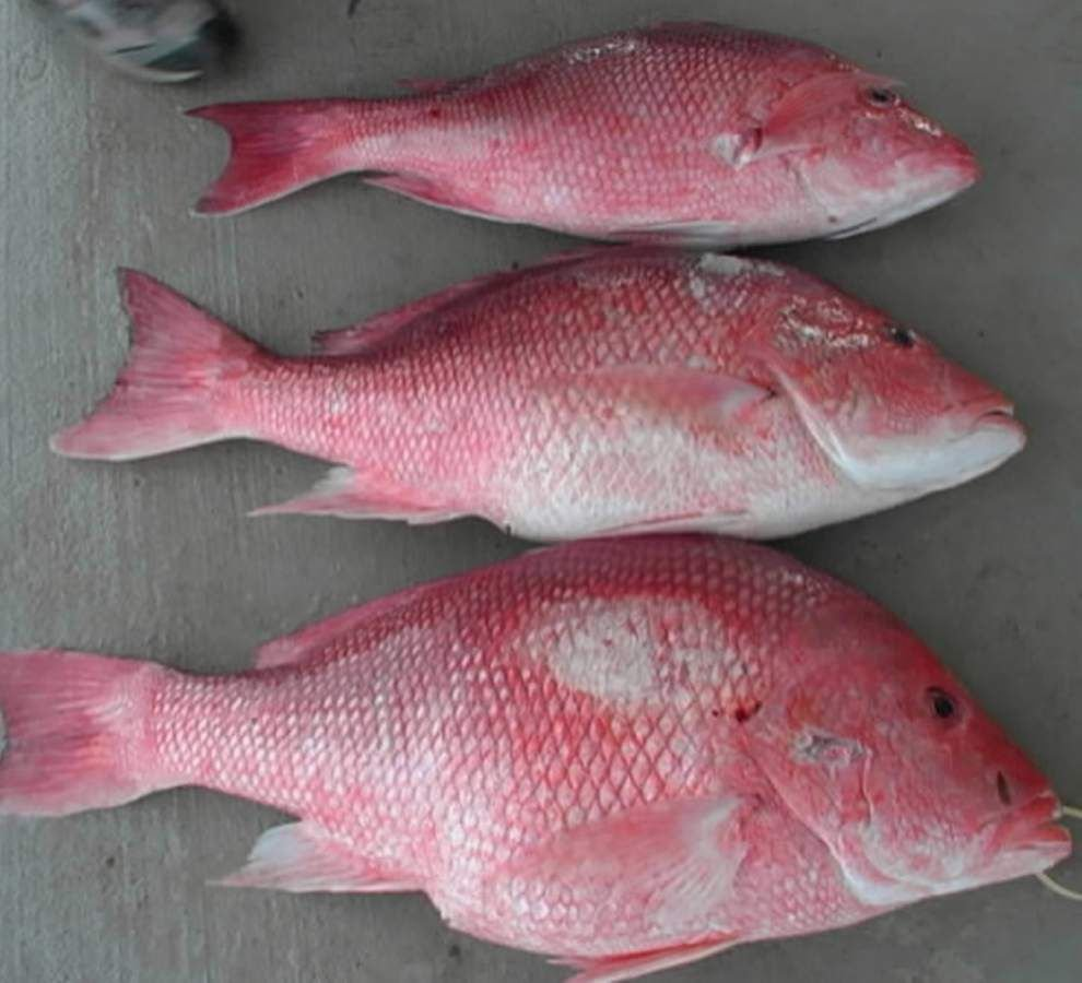 Sen. Mary Landrieu calls for change after feds set 9-day red snapper season _lowres