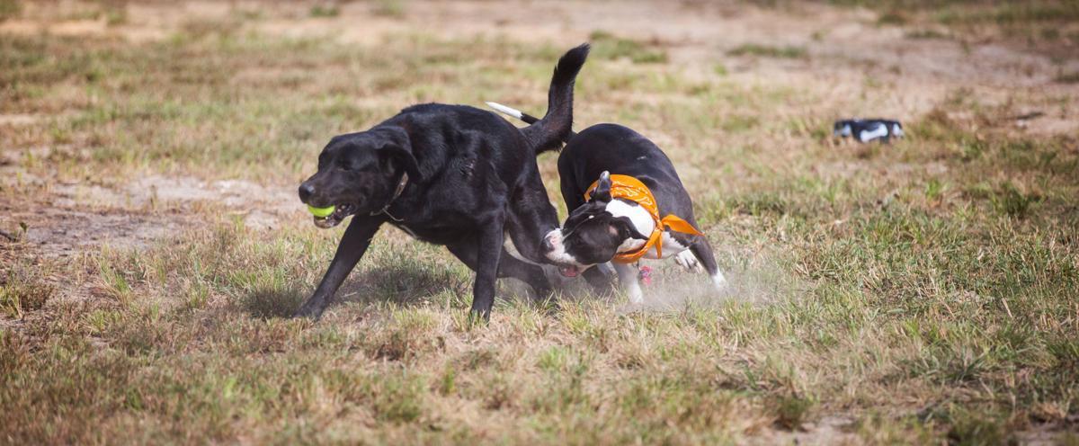 Fritchie Dog Park