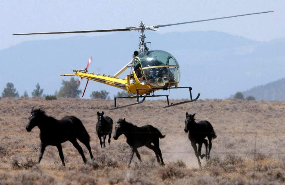Tribe, Robert Redford group OK wild horses plan _lowres