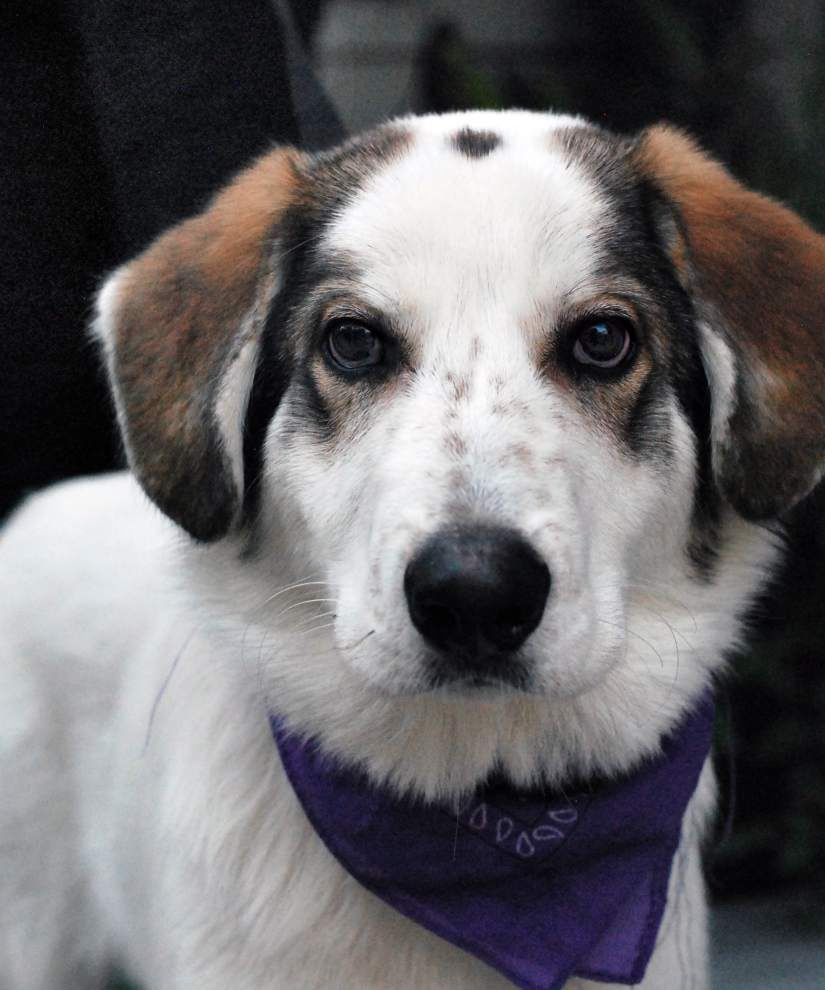 Southside pets available for Dec. 11, 2014 _lowres