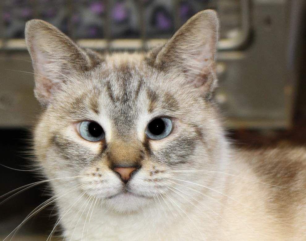 Livingston-Tangipahoa pets available for Feb. 12, 2015 _lowres