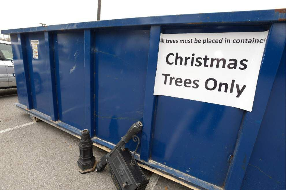 Christmas tree curbside recycling collection begins Monday _lowres