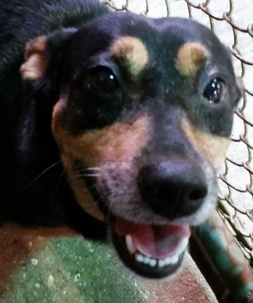 Ascension Parish pets available for Aug. 21, 2014 _lowres