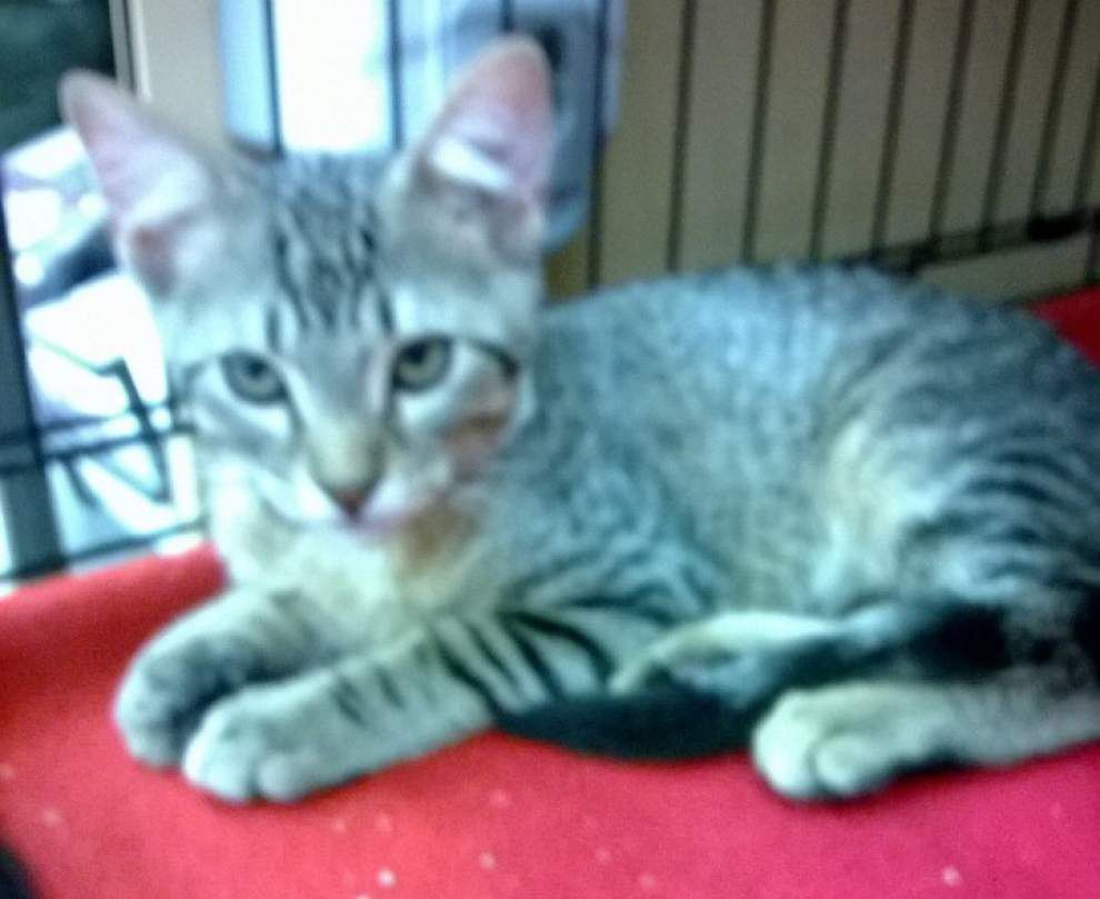 Livingston-Tangipahoa pets available for July 24, 2014 _lowres