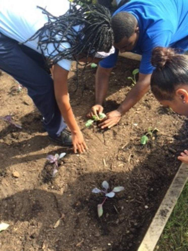 St. Helena Arts and Technology Academy students plant fall garden _lowres