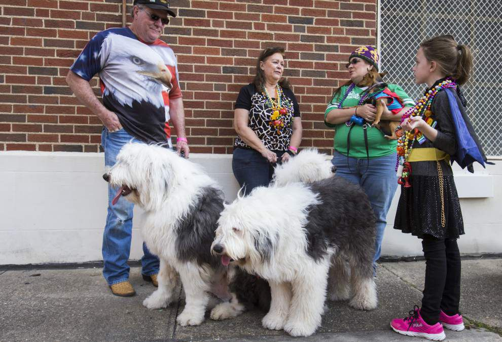 Lafayette's pooch parade proves a family-friendly crowd pleaser _lowres