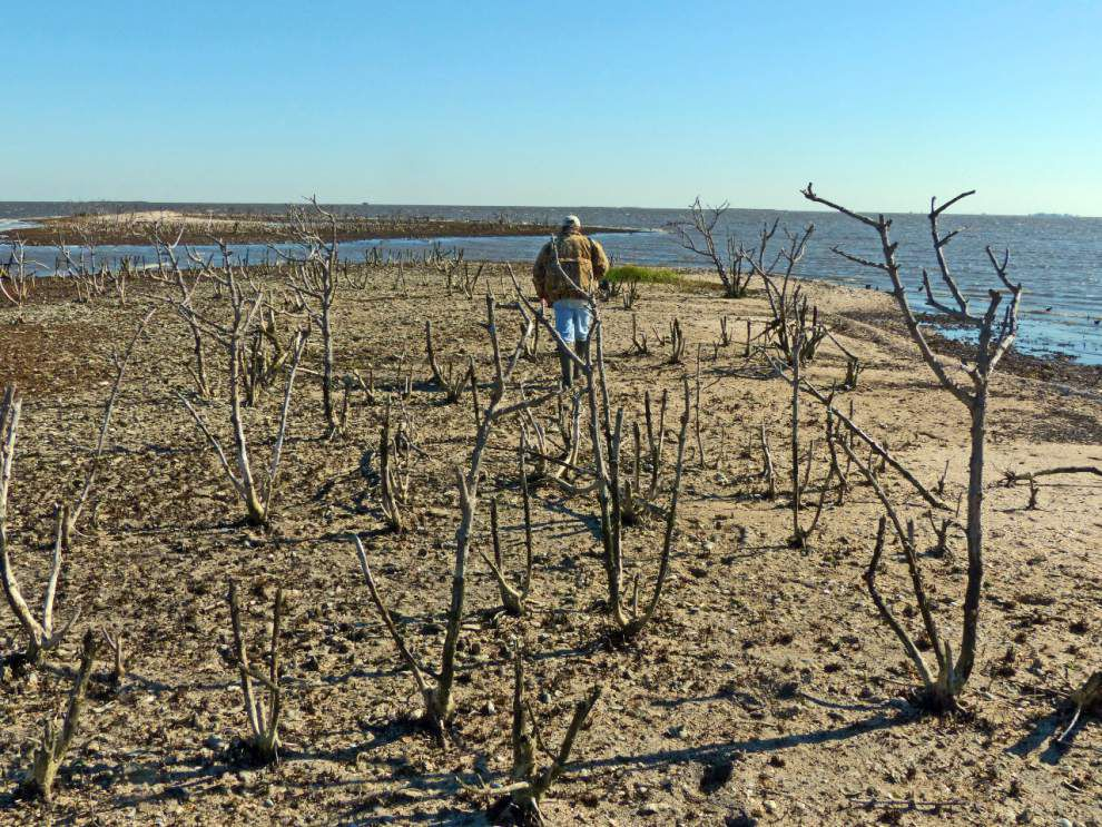 Plaquemines moves forward to restore pelican nesting site damaged by BP oil spill _lowres