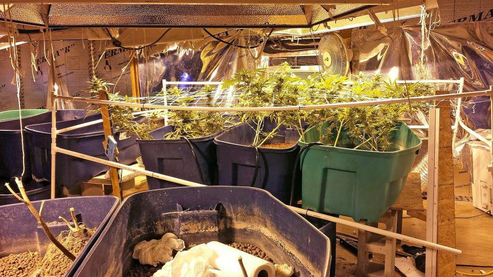Gonzales man booked after marijuana found growing in his home, authorities said _lowres