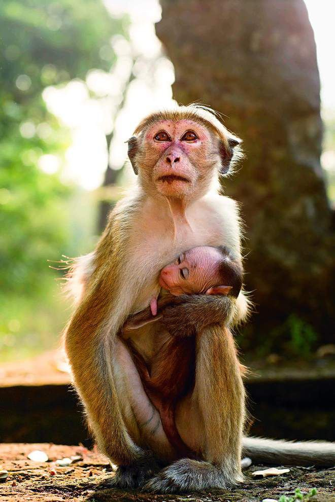 Review: Disneynature documentary gives fascinating view of monkeys' behavior _lowres