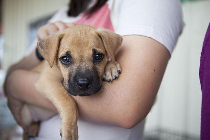Volunteers save animals from euthanization
