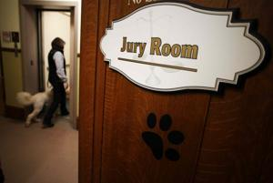 Court therapy dogs ease tension for troubled tots