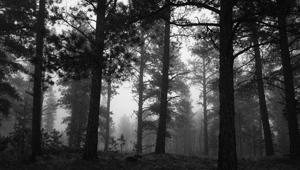 Wood Fog