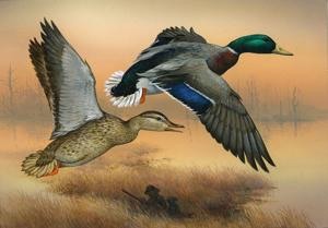 <p>This artwork, submitted to the U.S. Fish and Wildlife Service Headquarters Duck Stamp program, gets a lot of attention among sportsmen and other outdoor enthusiasts. The federal government estimates that 1.9 percent of the 150,000,000 acres (or 2,850,000 acres) of land was acquired with funds from programs including duck stamp sales. (Courtesy photo)</p>
