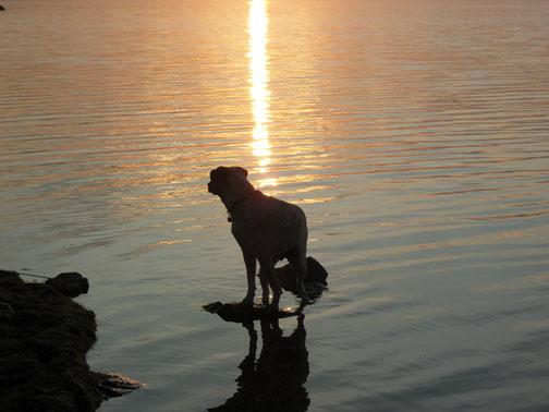 Dog on Lake