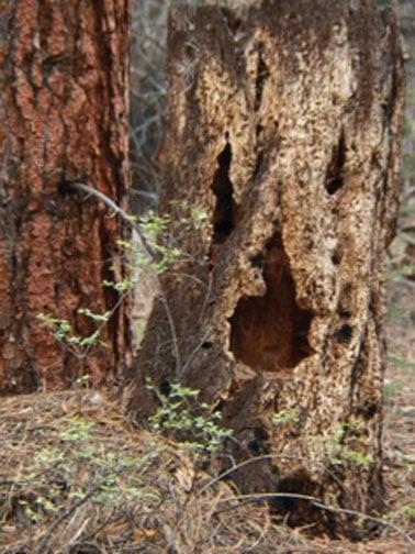 "The ""Boo Tree"""
