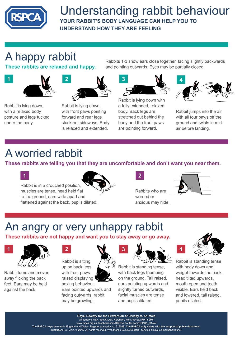 Pet Talk First Few Weeks With Bunny Pet Talk