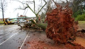 Trees downed, hail reported in Shoals