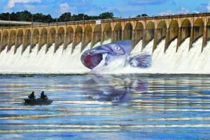 Giant catfish trapped in spillway