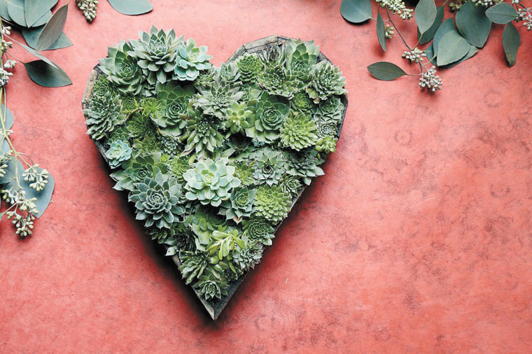 Art alive: Bring garden walls to life by framing succulents