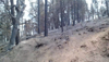 Trinity Pines post-fire video