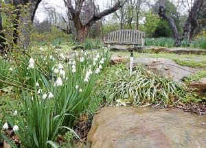 Gardening classes, shows help in spring preparations