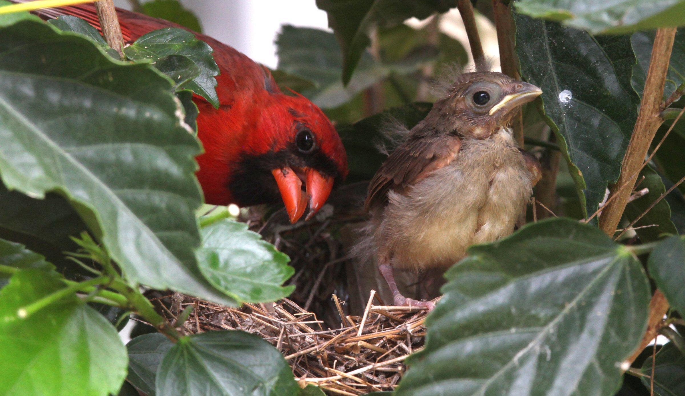 red bird nest and - photo #23