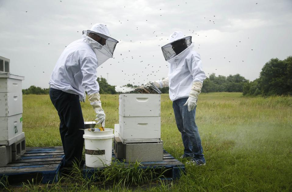 beekeeping aids participants in john 3 16 mission recovery