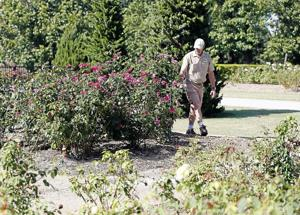 Tulsa rose bushes fall victim to deadly disease