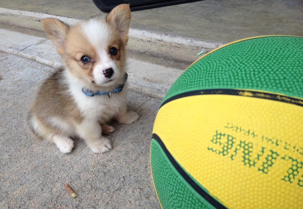 Meet The Pets Of Tulsa World Newsroom Staffers In Honor Of