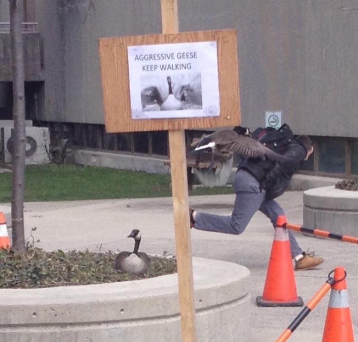 geese sign