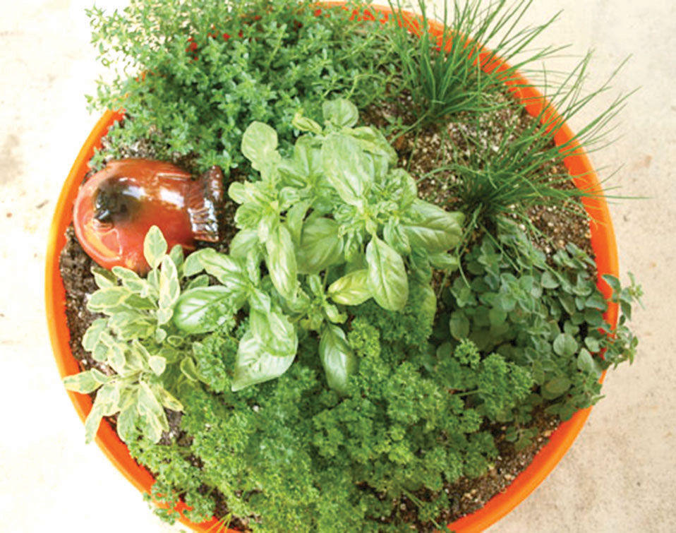 Garden Design with Herb container gardens flourish offer tasty rewards Home and with Home Garden