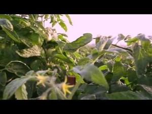 Yuma farmers featured in Subway video