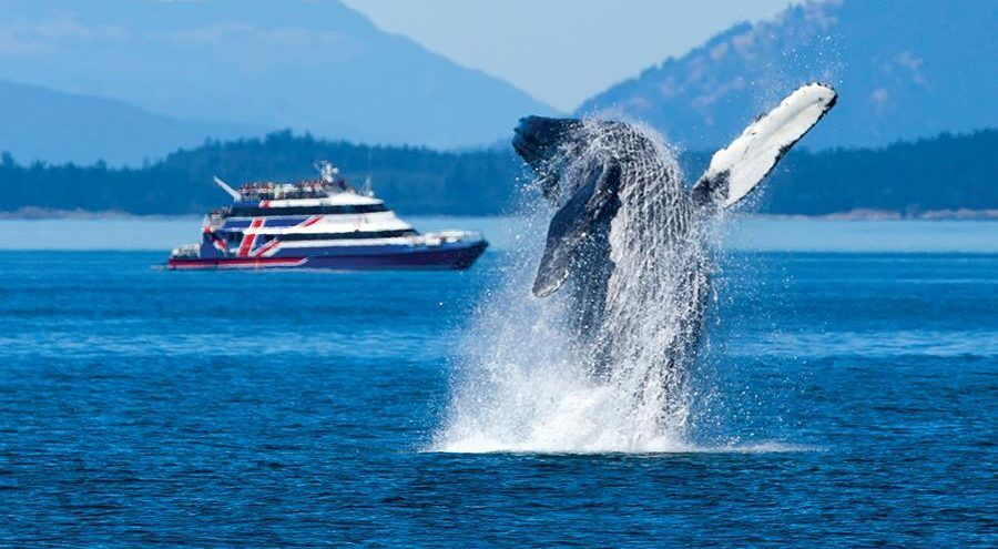 Courtesy of Clipper Vacations