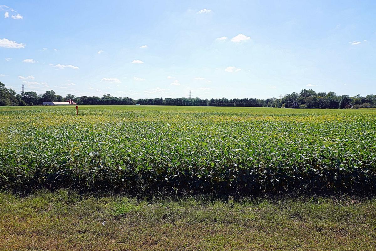 Monte Farm field, site of massive housing development