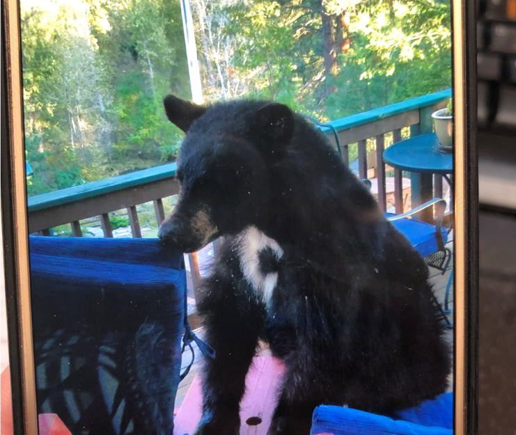 Missoula homeowner says bear broke into garage, ate beef tenderloin