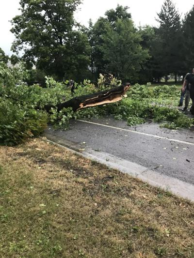 Strong weekend winds take down tree limb blocking Brooks Street