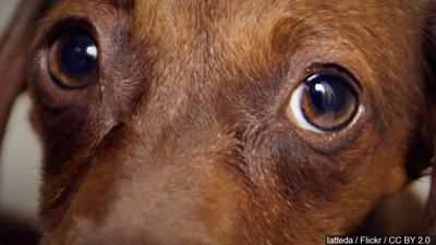 Claims of Animal Cruelty Under Investigation in Great Falls