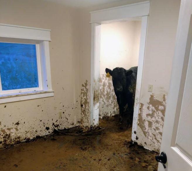 cows house reddit post